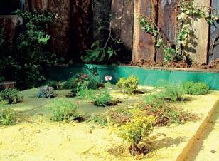 Sadenie rastlín do vegetačnej vrstvy