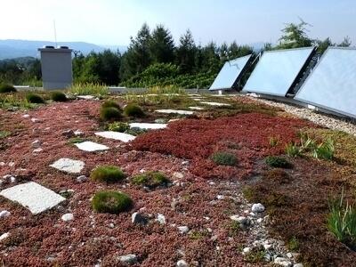 Ploche strechy s vegetaciou