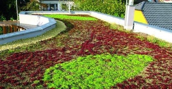 Vegetacne zelene strechy s extenzivnou zelenou