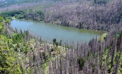 Acidifikácia vody a pôdy